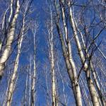 Trees Need Not Walk the Earth